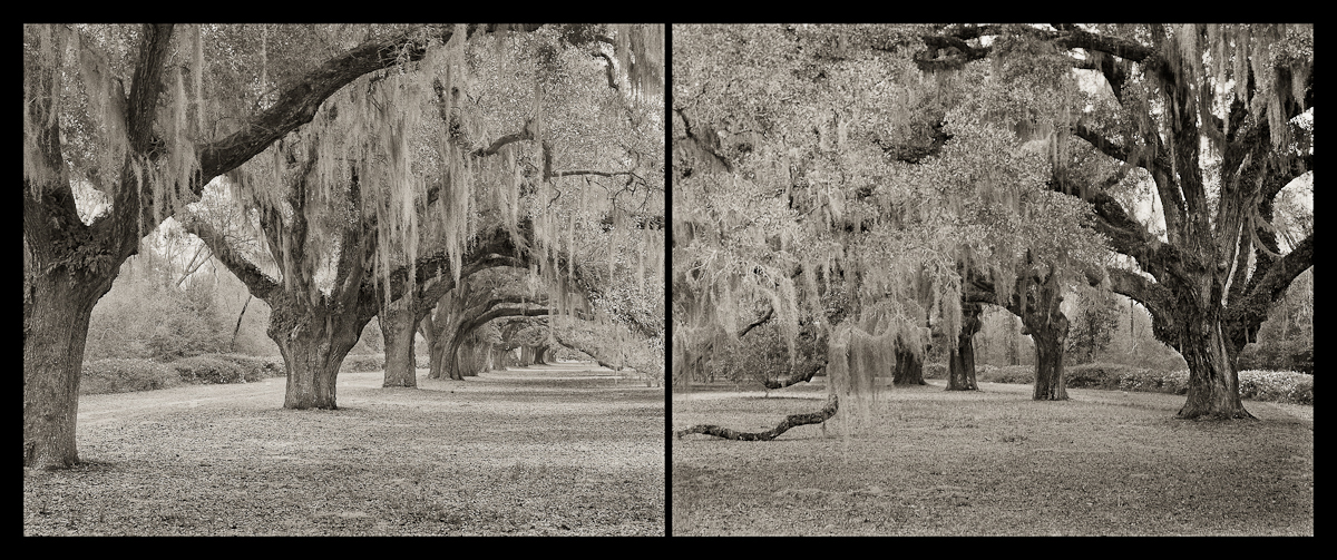 Avenue of Oaks, Diptych Dixie Plantation, Hollywood, SC