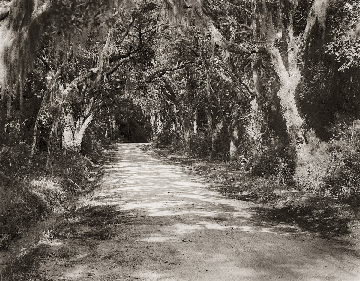 Old Kings Highway, Edisto Island, SC