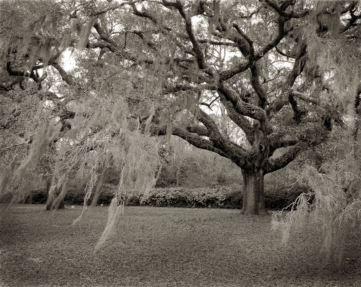 Old Mossy Oak, Dixie Plantation, Hollywood, SC